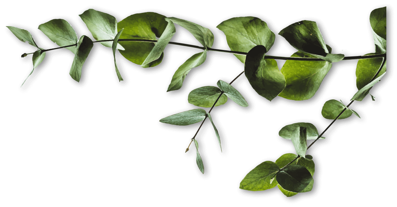 leaf growing from right side