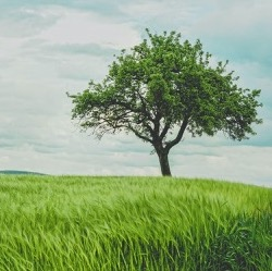 Healthy tree with green leaves sitting alone on a grassy hillside