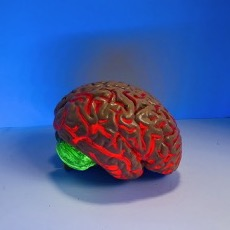 Plastic brain with neon green lights coming out of the cerebellum and red light coming out of the rest
