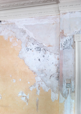 Multiple layers of wallpaper and mold found on the walls after removing the first layer of wallpaper.