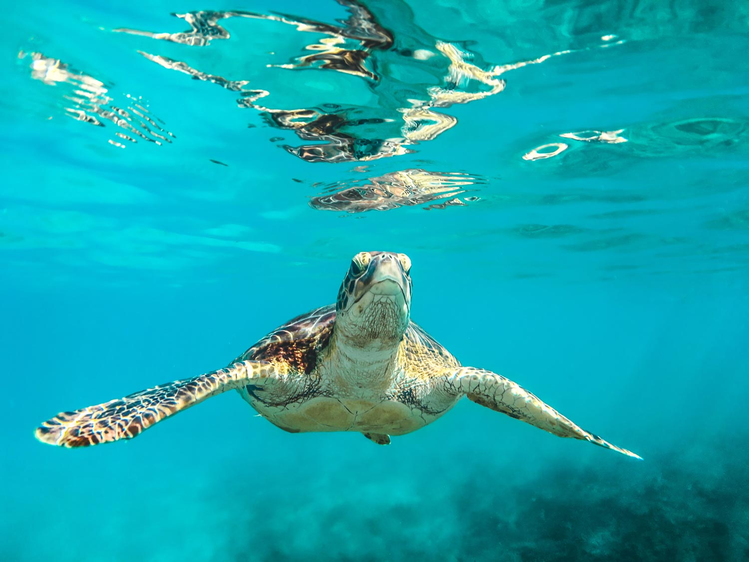 Underwater photo of a sea turtle swimming in tropical waters.