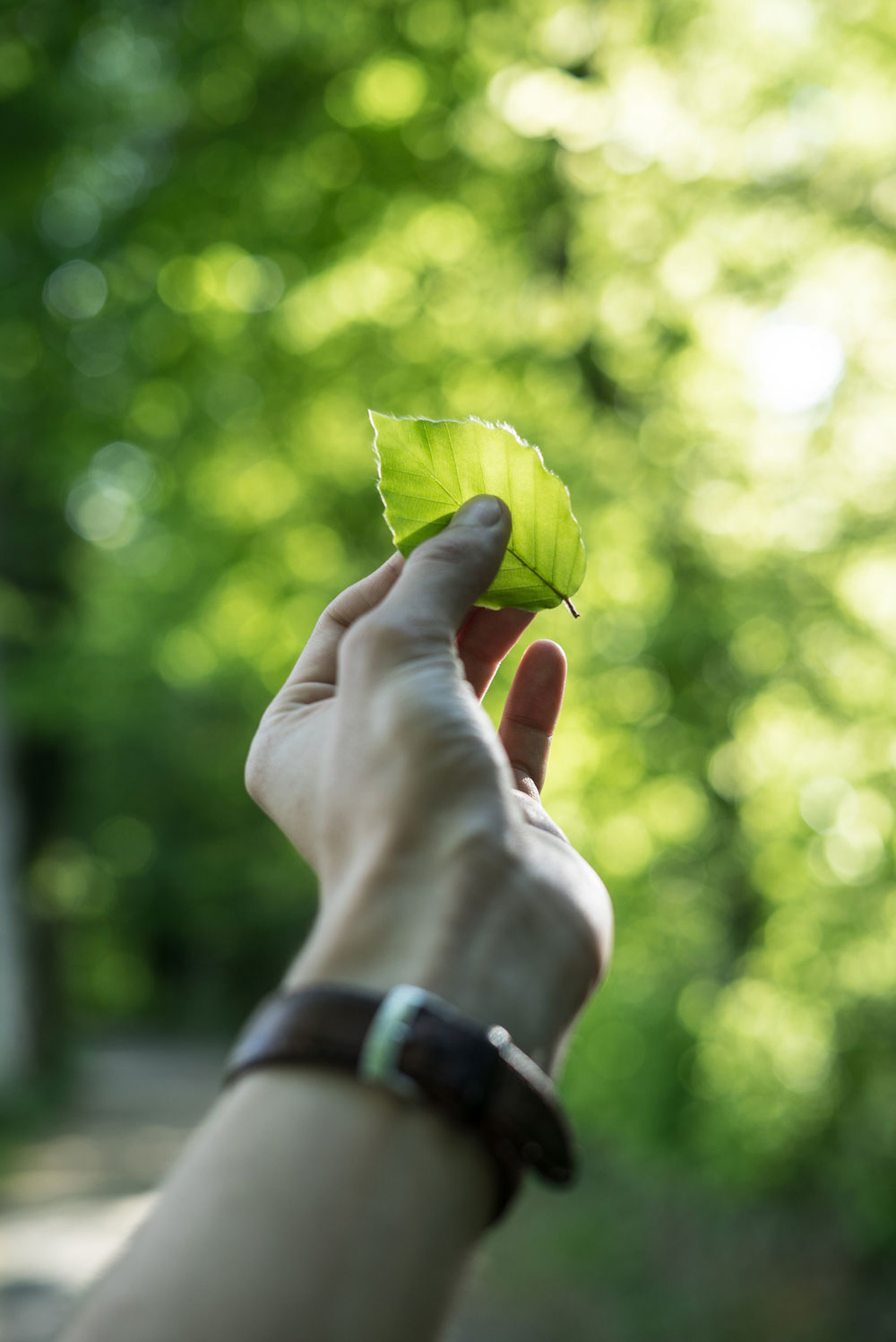 POV photo of a hand holding a green leaf.