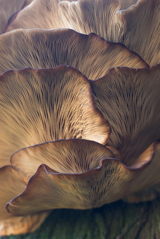 Closeup photo of mushrooms.