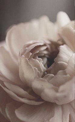 © photo et fleur: Saipua