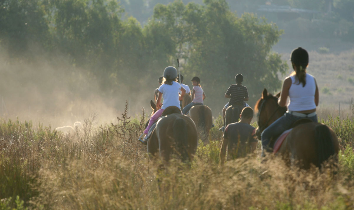 Group of riders and horses on path in field