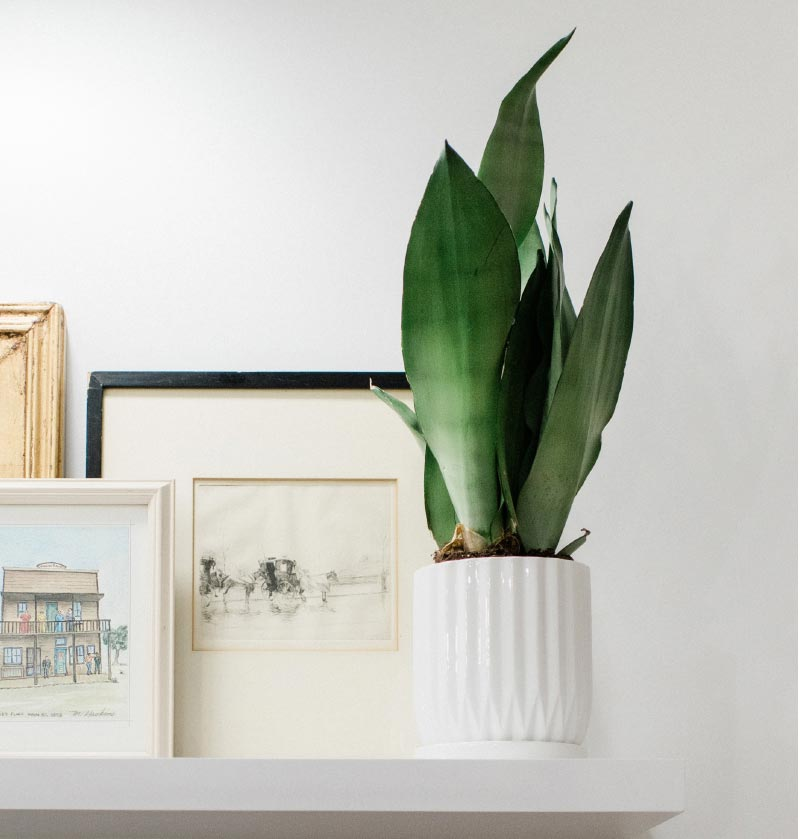 Photo of a plant and several pieces of art sitting on a shelf