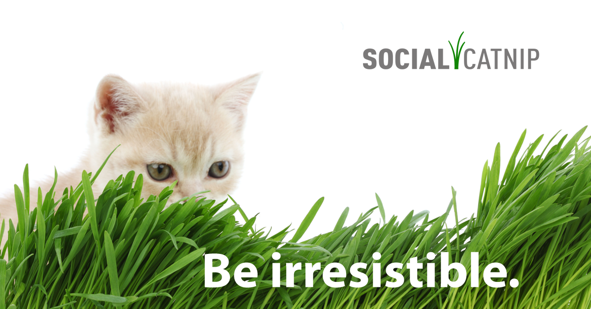 Social Catnip Logo Image