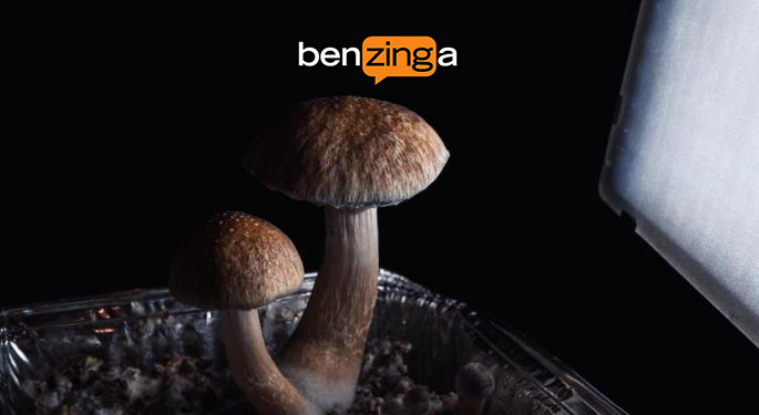 Is Oregon Set to Legalize Magic Mushrooms?