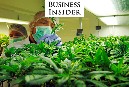 Canndescent Lands New Funding, Social Justice Activists Versus Corporate Cannabis, and More