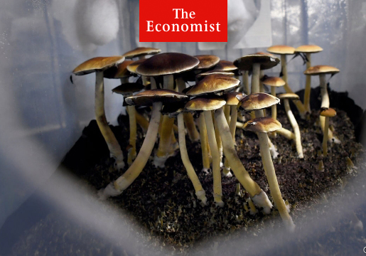 Investors Hope Psychedelics are the New Cannabis. Are They High?