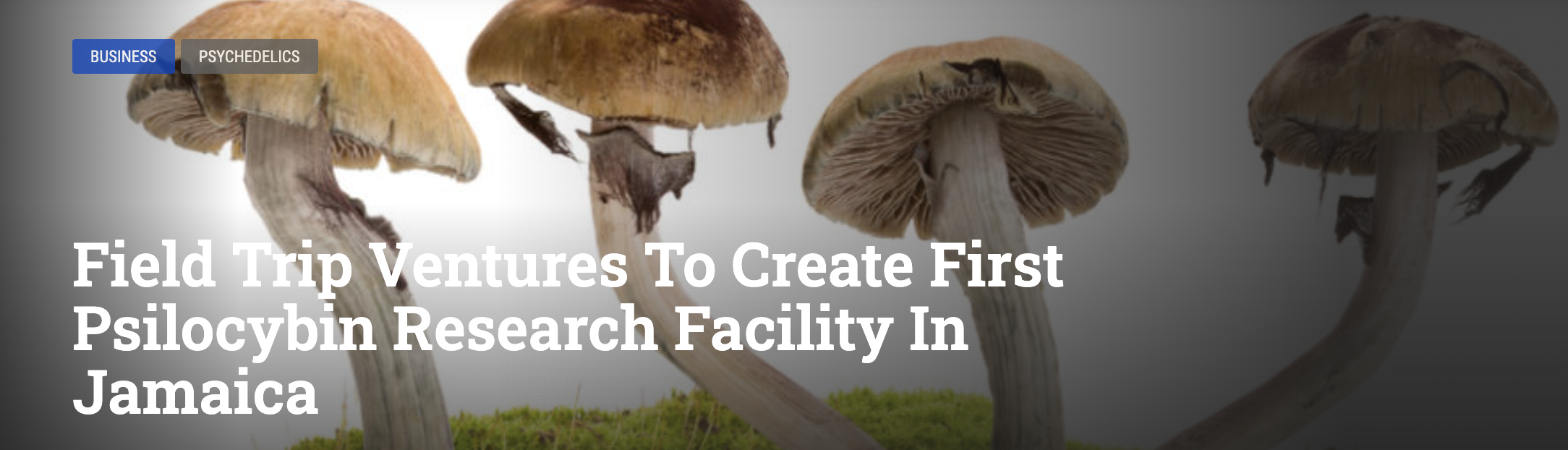 Field Trip Ventures to Create First Psilocybin Research Facility in Jamaica