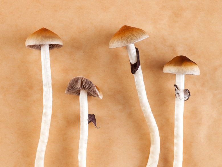 First Pot, Now Magic Mushrooms? Mainstream Attention Is Growing