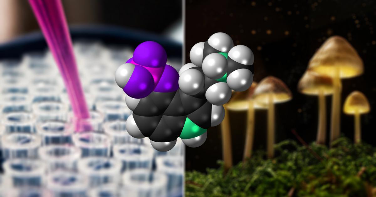 Understanding The Psilocybin Supply Chain
