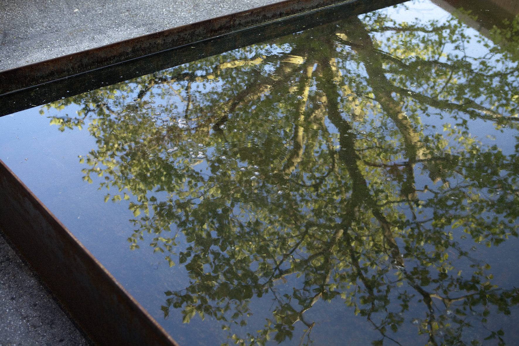 Baum spiegelt sich im Brunnen