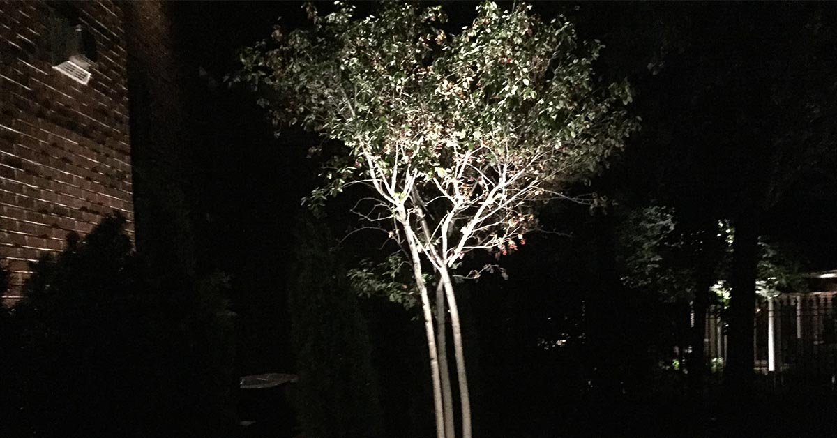Ornamental Tree Service