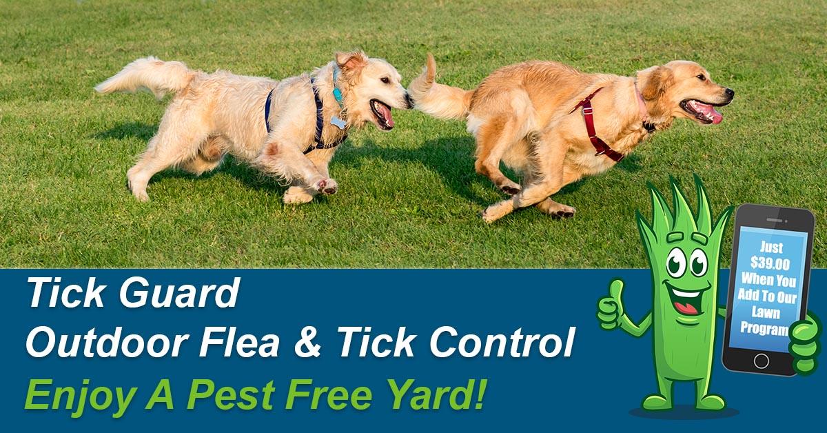 Outdoor Flea & Tick Spraying Service
