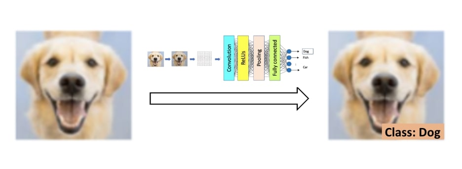 """The whole process: An unlabeled image is classified by a CNNand labeled as """"Dog"""""""