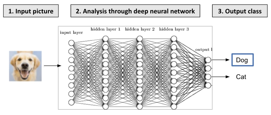 How image classifiers work through neural networks
