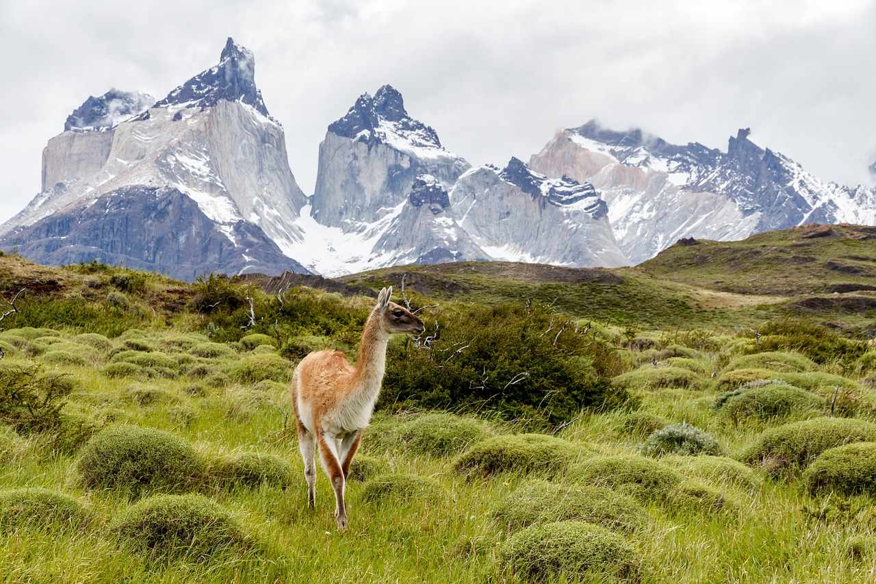 Wildlife in Patagonia with mountains in the background