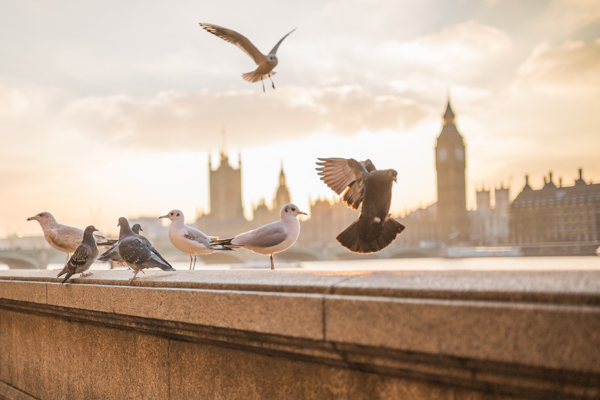 birds flying along the river thames in London, England
