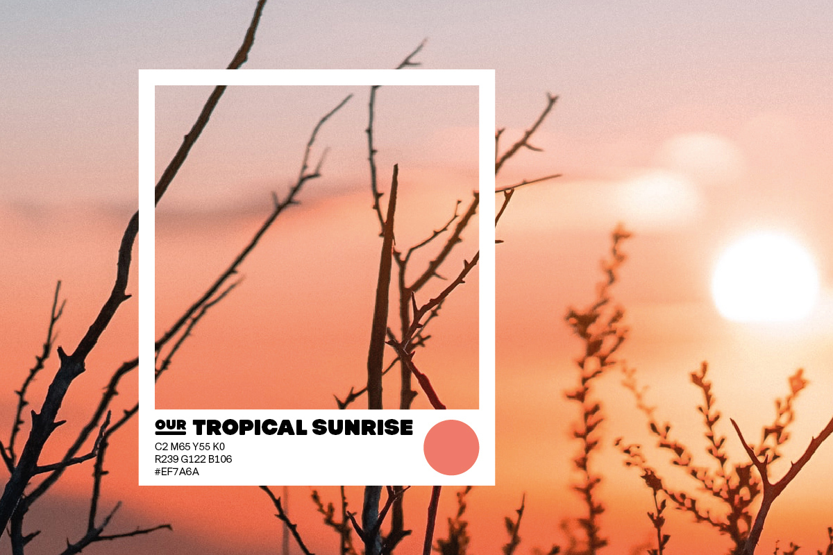 SPX Agency Work: OurCampus Colour Tropical Sunrise