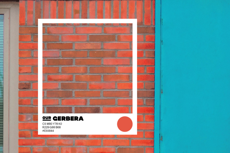 SPX Agency Work: OurDomain Colour Gerbera