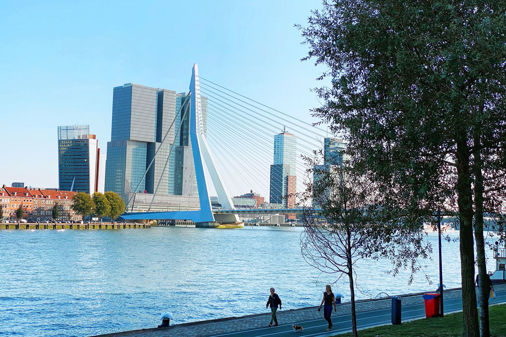 View of Rotterdam Bridge on a sunny day