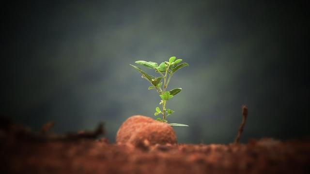 Ein Sprößling einer Pflanze in der Erde