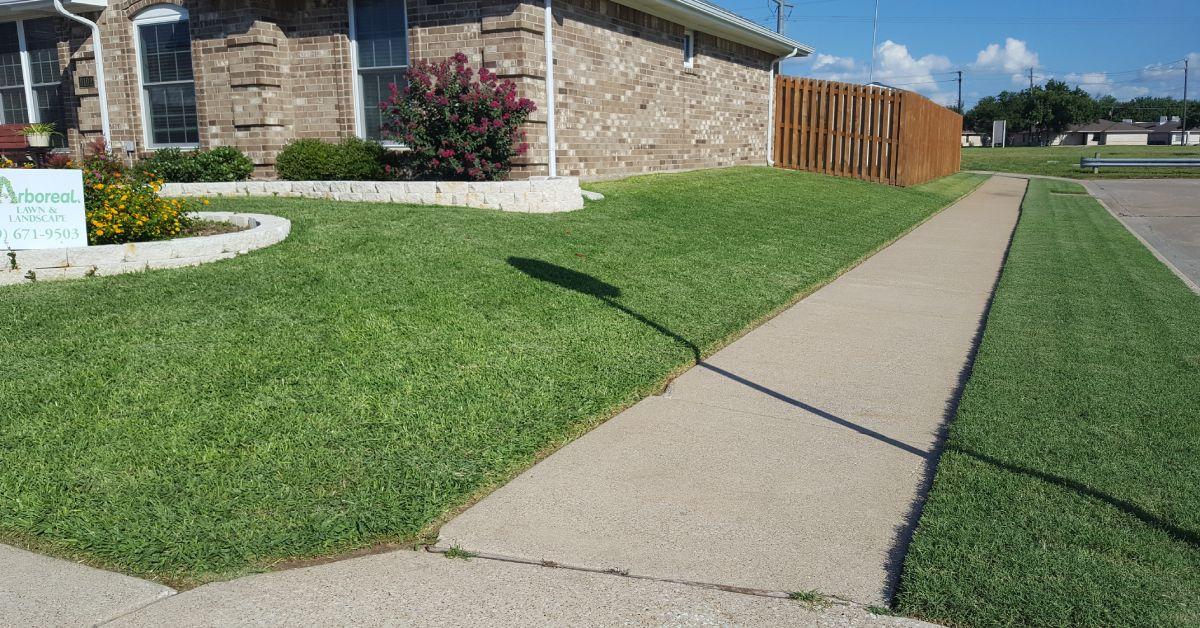 Lawn Overseeding Service