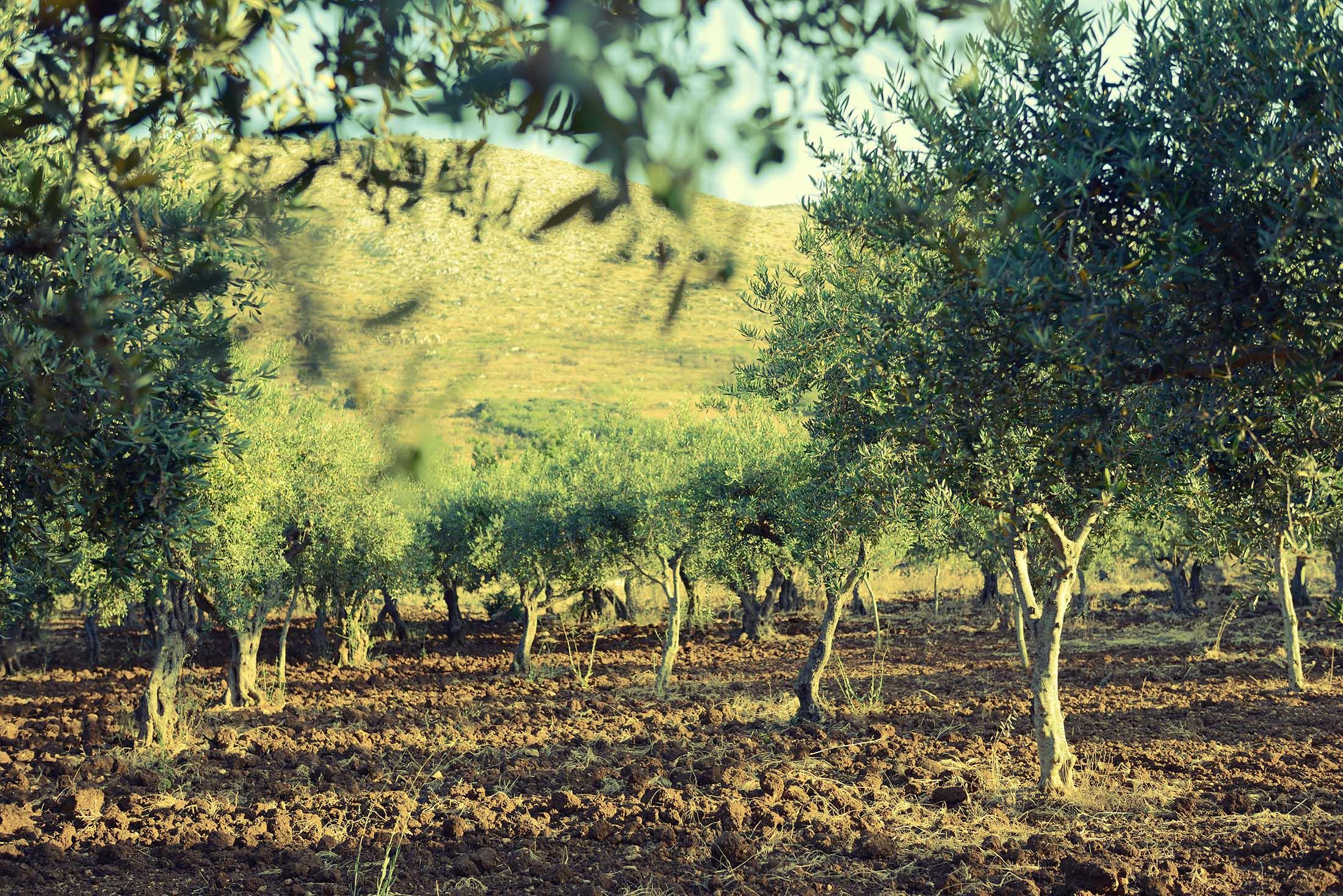 II. natječaj LAG-a Škoji za TO 1.1.4 Potpora razvoju malih poljoprivrednih gospodarstava