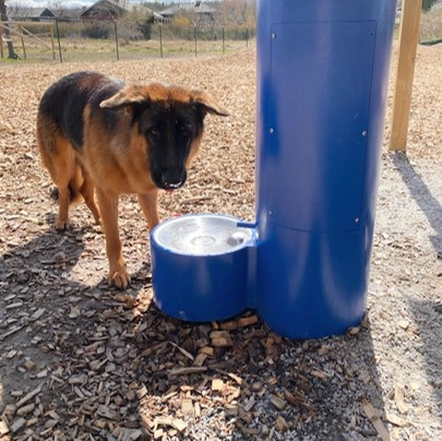 Dricksfontän i hundrastgården