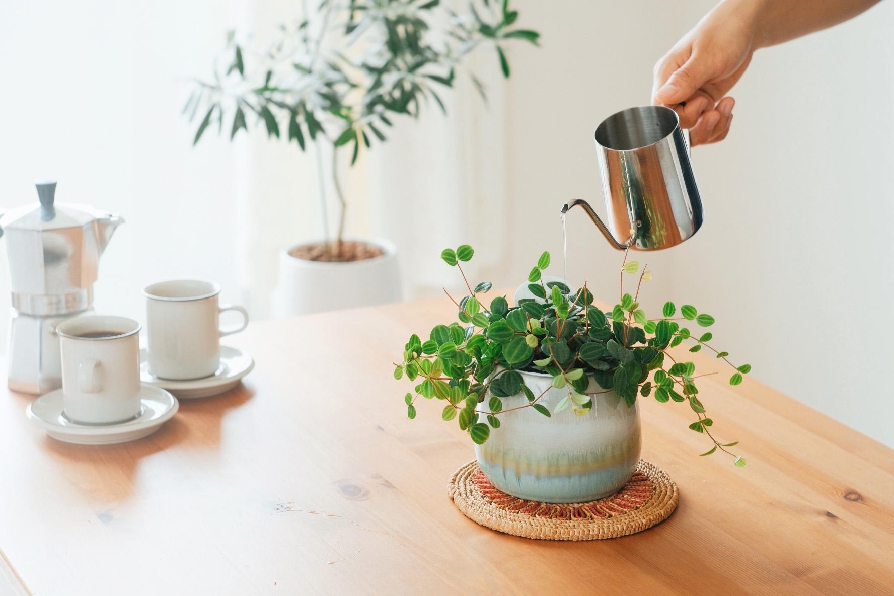 Growing people's wellbeing