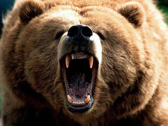 Urso bravo bear market