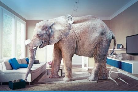 elefante-na-sala-riscos