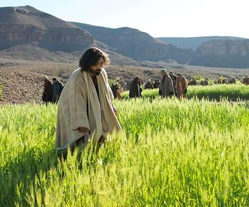 Jesus in the fields