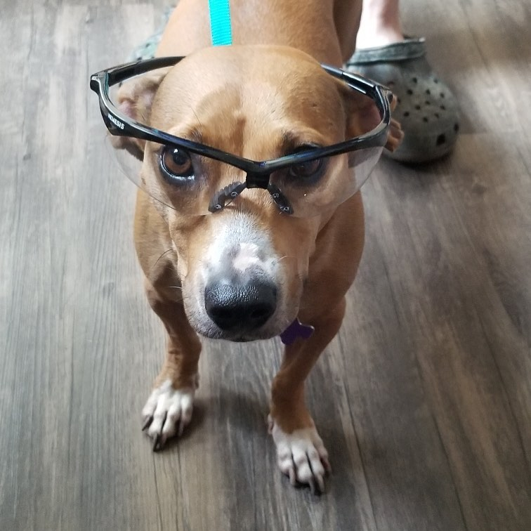 STOQ's summer intern, Maxie, understands the importance of PPE