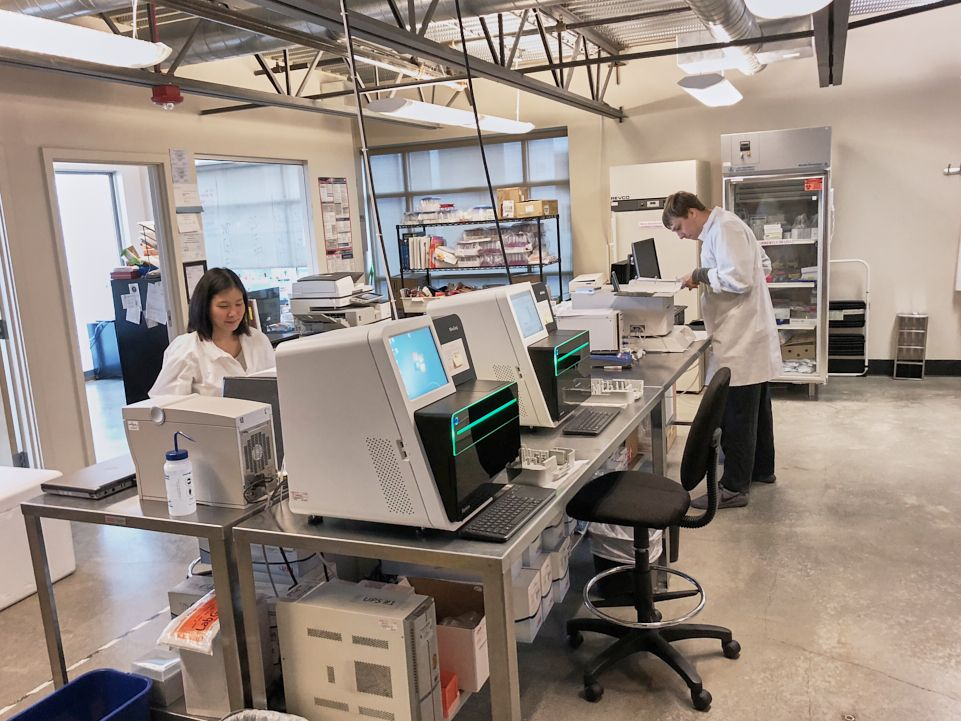 Molecular laboratories carry out analyzes