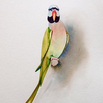 Watercolour Bird
