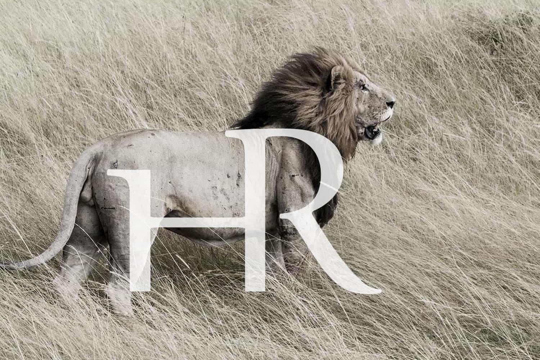 Creazione logo Aphrica