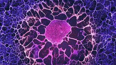 Adult Stem Cells_BioStem Technology