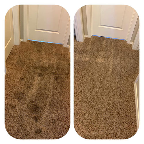 pet stain removal review