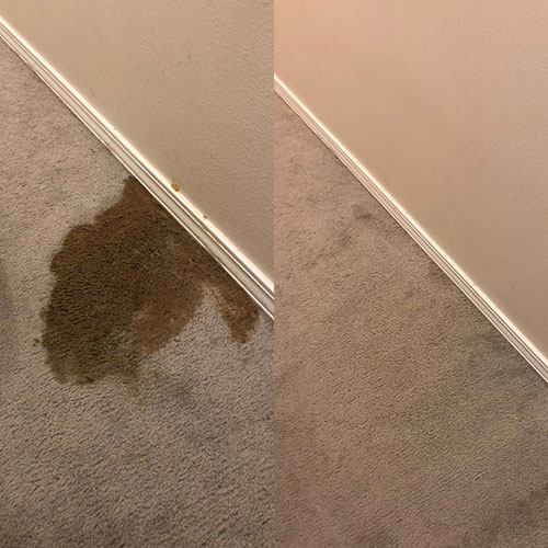 mountain home pet stain removal