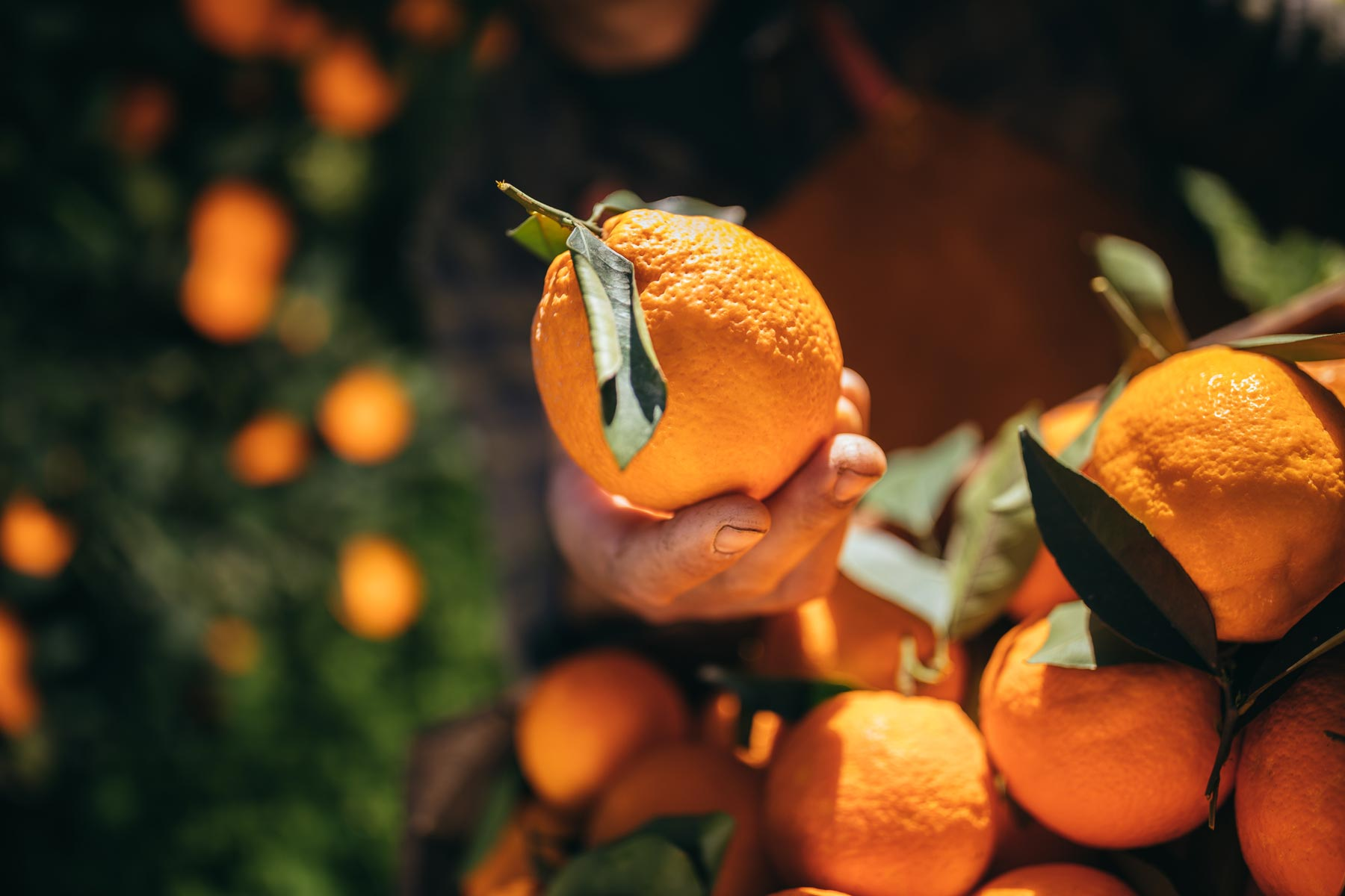 Hero image for The Hunky Dory World section of closeup of a mans hand holding a orange in an orange grove.