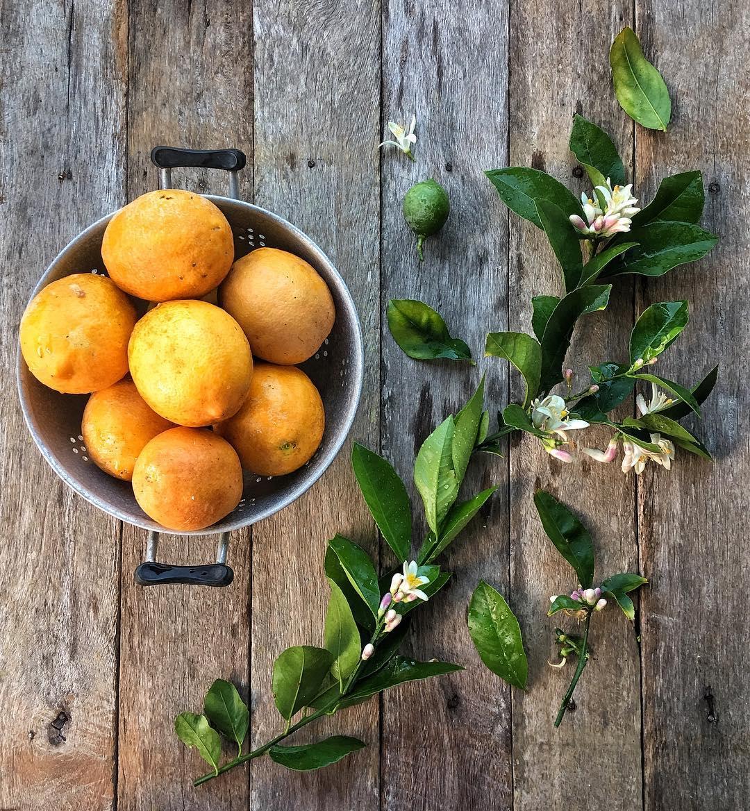 laranjas com folhas e flores em uma peneira em um fundo de prancha rústica