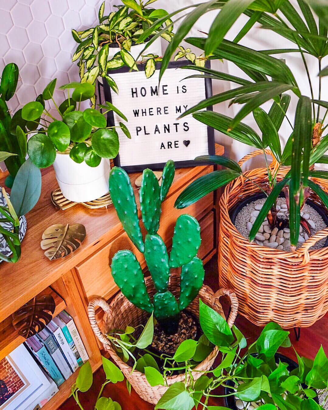 Living Props: Most photogenic plants to style and create with