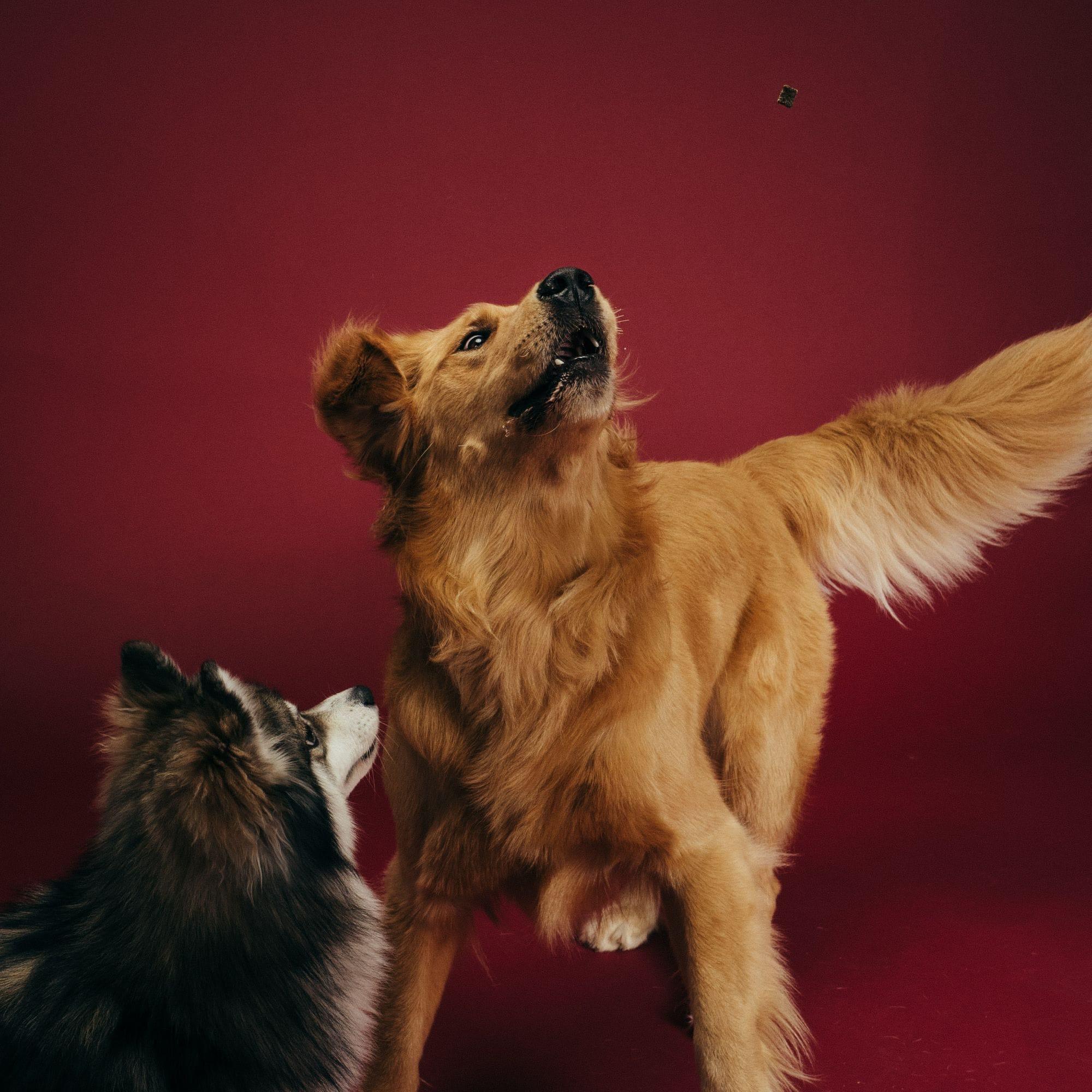 omg a dog treat!