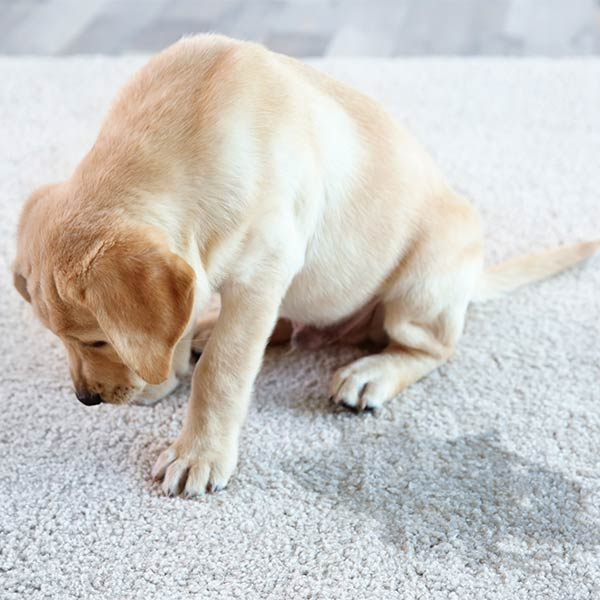 Pet Stains & Odor Removal in South Dakota