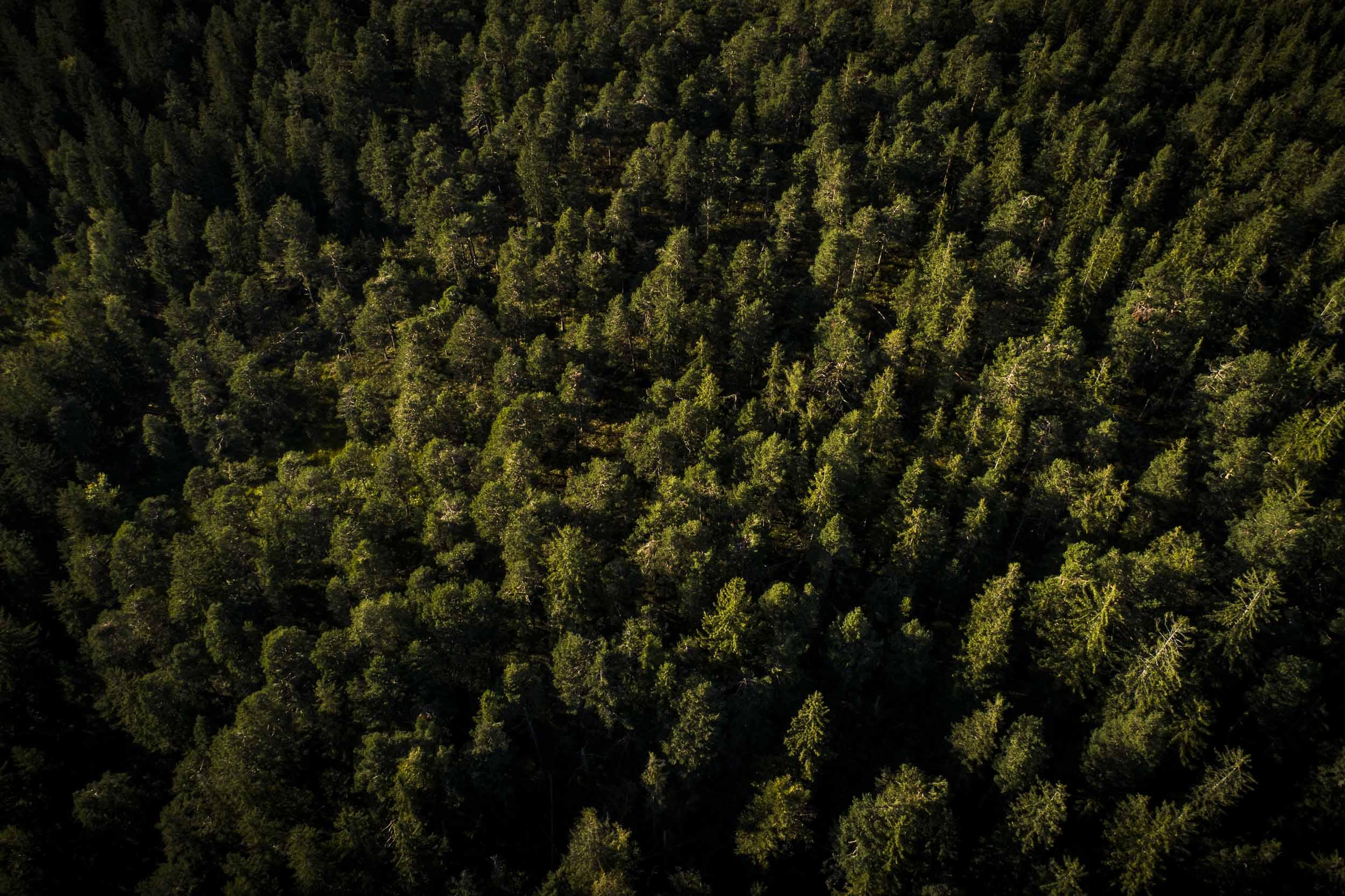 Waldabschnitt aus der Vogelperspektive.