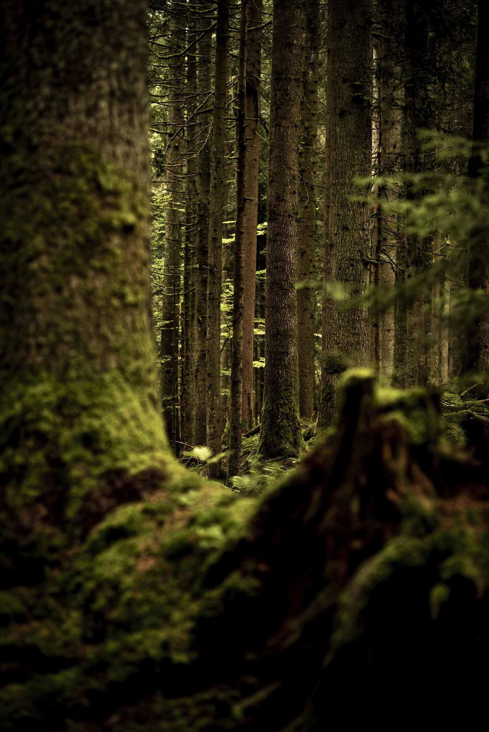 Ein moosiges Waldstück.