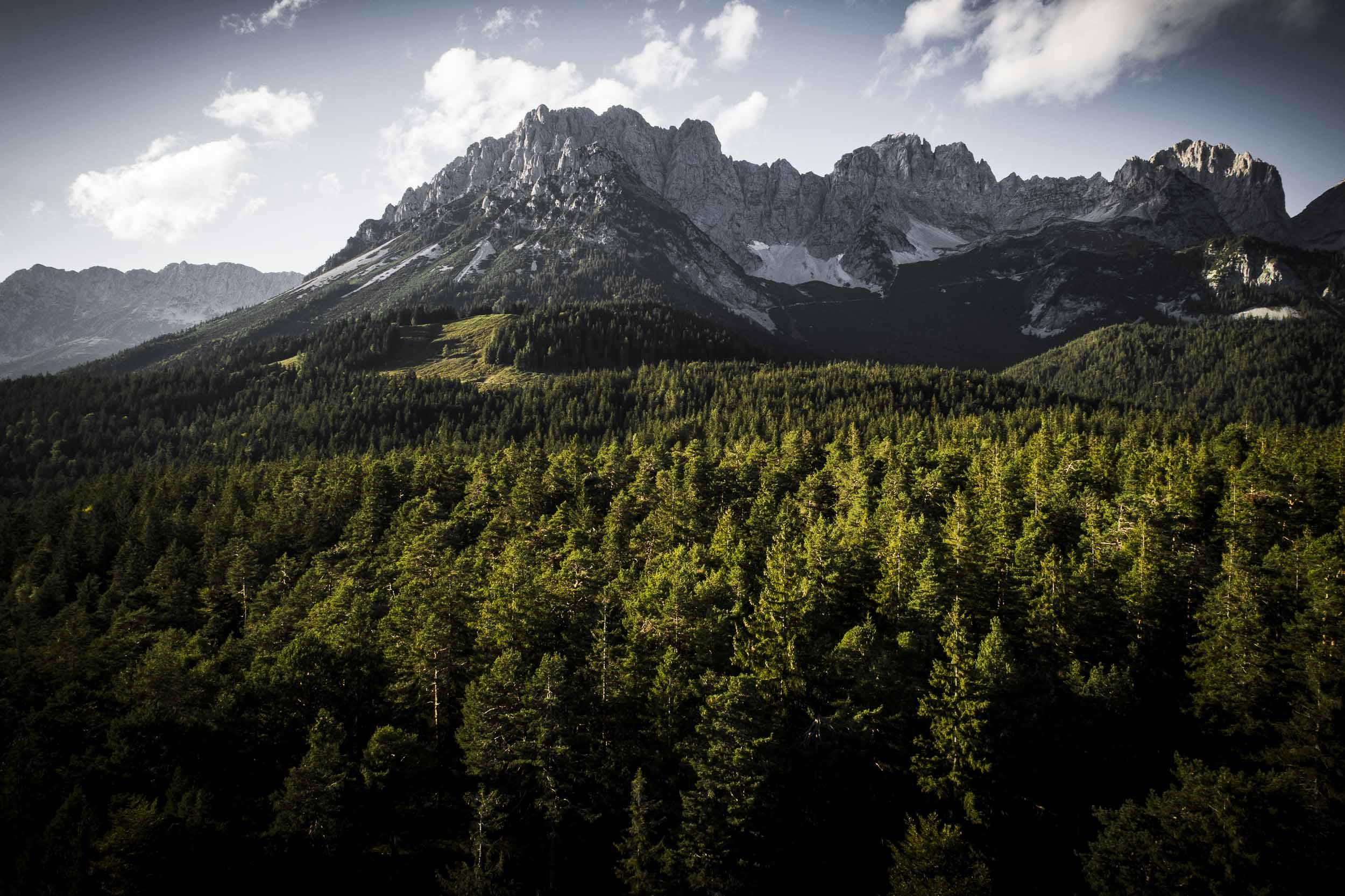 Waldstück am Fuße des Wilden Kaisers.